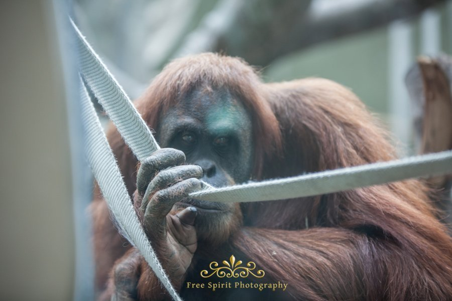 Chester_Zoo