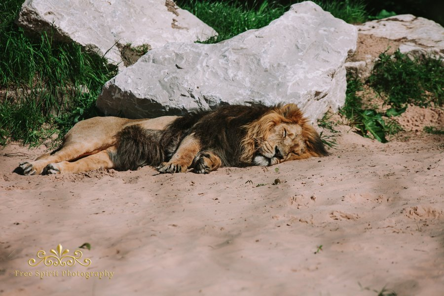 Chester_Zoo_002