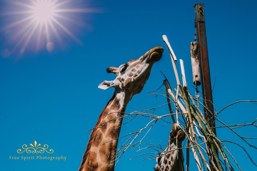 Chester_Zoo_020